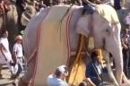 Elephants On Parade