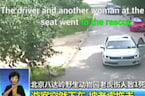 Video Footage Shows Tiger Attacking Woman At Beijing Wildlife Park