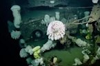 World War II Aircraft Carrier Wreck Explored For The First Time Ever