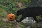 Pumpkin treats spook animals