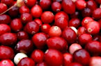 Cranberry Juice Doesn't Prevent Urinary Tract Infections