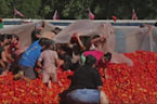 Splat! Hundreds of people join in Tomato War fun in Chile