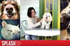 Cute! Celebrities Celebrate National Puppy Day!