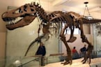 Dinosaurs Might Be From Scotland, Could Be Reclassified