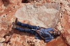 Researchers Discover the World's Biggest Dinosaur Footprint