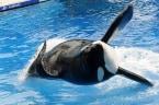 SEC, DOJ Investigate SeaWorld for 'Blackfish' Response