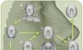 Forscher erzeugen aus DNA treffende Fahndungsfotos