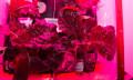 Da haben wir den Space Salat: Astronauten essen schwerelos gewachsenes Gemüse