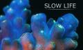 Slow Life: Korallen und Schwämme bewegt und en détail (Video)