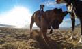 GoPro Fetch te ofrecerá el punto de vista de tu canino amigo
