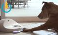 CleverPet, el juego que entrenará la inteligencia de tu perro