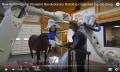 Roboter-CT scannt auch wache Pferde (und euch?)