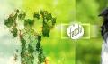 Fetch: Microsoft entwickelt App zum Erkennen von Hunderassen