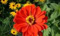 NASA bringt Blumen auf die ISS