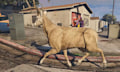 Livestream: Ein Hirsch wandert durch San Andreas (GTA V)