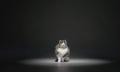 Catterbox: Miau-to-Speech für Katzen und ihre Halter