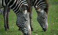 Zebra Technologies soll Motorola Solutions übernehmen