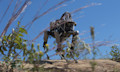 Boston Dynamics Spot Roboter im Marine-Test