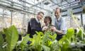 Fraunhofer-Forscher produzieren Kautschuk aus Löwenzahn