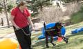 4 Prothesen für Brutus: Crowdfunding bringt Rottweiler wieder auf die Beine
