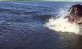 Lucky Shot: Nilpferd in Aktion mit iPhone 6-Zeitlupe aufgenommen