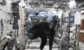 Astronaut im Gorillakostüm auf der ISS