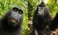 La ridícula disputa por el selfie de un macaco