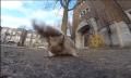 Sonst was? Eichhörnchen klaut GoPro-Kamera