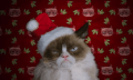 Worst Christmas Ever: Der Grumpy Cat Film (Video)