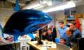 Gedankenkontrolle: 5 Hirne steuern einen fliegenden Hai (Video)