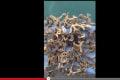 「エイリアンのような謎の海洋生物」が発見される! 海洋汚染から生まれたのか?