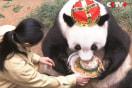 人間でいったら140歳!中国一長生きなパンダのお誕生日が盛大すぎる【動画】