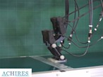 This tiny, bipedal robot can...