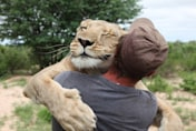 Man who raised lioness from cub now teaches her to hunt