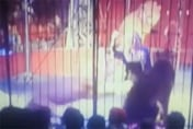 Terrifying moment lion turns on trainer during circus performance