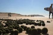 UFOs on Sydney beach? 'Alien eggs' wash up on the sand