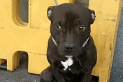 Dog abandoned at Eastbourne Railway station returned to original owner