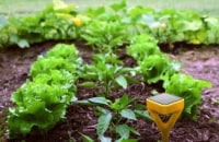 Edyn's smart gardening system gives your plants exactly what they need