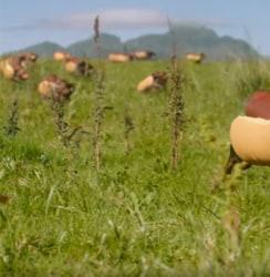 ハインツのスーパーボウルCMでホットドッグ姿のダックスフントが大量発生www【動画】
