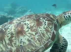 これは良案!海の生物を守るために考案された「あるモノ」が画期的すぎる【動画】