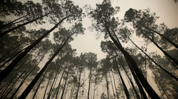 Staggering percent of forests ruined by fire in