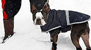 3 ways to keep your pets safe in winter