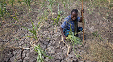 Study: Heat, drought led to losses of 3 billion tons of world's cereal crops from 1964 to 2007