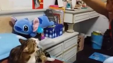 飼い主の指示に従って鳴き声を変えるニャンコが賢こ可愛すぎる【動画】