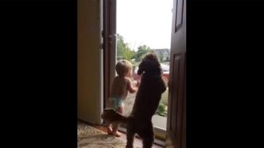 「お父さんが帰ってきた!」 大興奮で大喜びする赤ちゃんとワンコが可愛すぎる【動画】