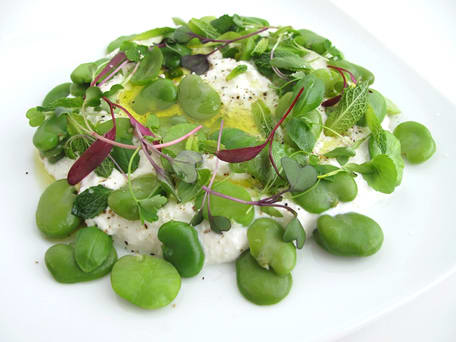 Fresh Ricotta with Olive Oil, Fava Beans, and Herbs