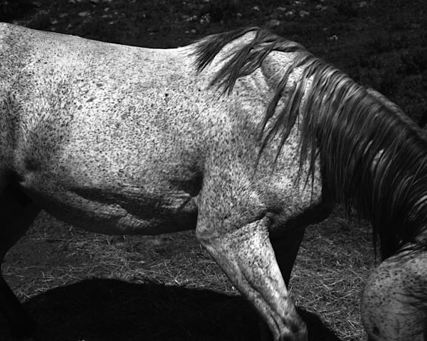 Whitney Hubbs  Untitled (Horse), 2012  silver ge