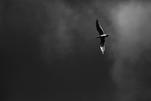 A lone seagull on the sky of New York City. Seagul
