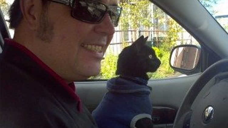 Faux-Paws: Igor, The Driving Cat