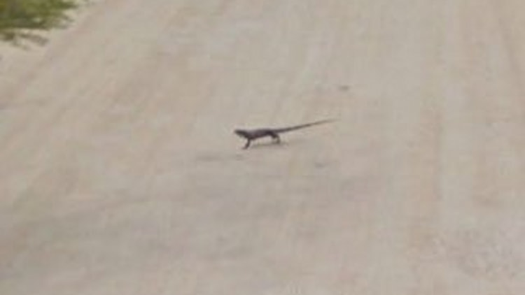 And Suddenly ... Lizard
